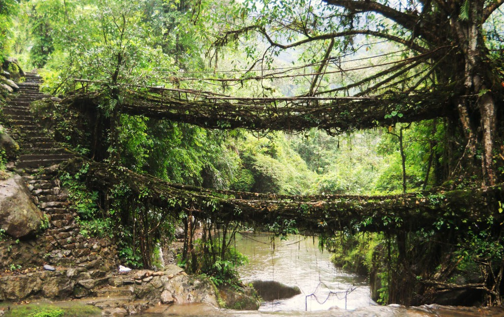 living-root-bridges-1024x644